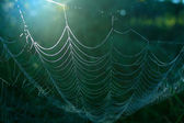 Web in wood — Stock Photo
