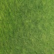 Grass texture — Stock Photo #5627919