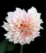 ädla blomman — Stockfoto