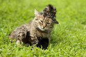 Female cat and her kittens — Stock Photo