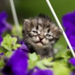 Kitten in flowers — Stock Photo