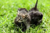 Mały kotek — Zdjęcie stockowe