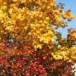 The beautiful autumn yellow and red leaves — Stock Photo