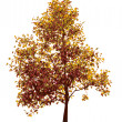 Royalty-Free Stock Imagen vectorial: Colorful autumn tree