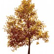 Royalty-Free Stock Immagine Vettoriale: Colorful autumn tree
