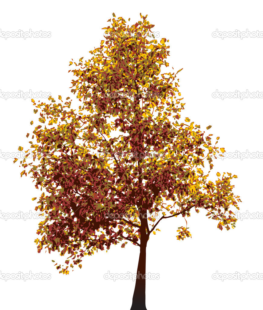 Colorful autumn tree isolated on white background — Stock Vector #6036103