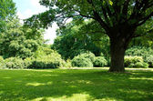 Summer tree and grass — Stock Photo