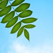 Beautiful green branch on the sky background — Stock Photo
