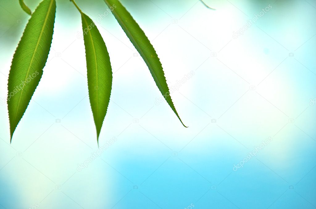 Green leaf on the blue background — Stock Photo #6233707