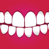 White teeth gums — Stock Vector