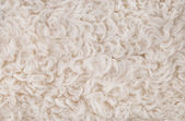 White fur texture background — Stock Photo