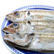 Horse mackerel - Stock Photo