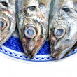 horse mackerel — Stock Photo