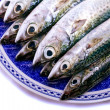 Atlantic mackerel — Stock Photo #6572331