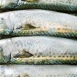 Atlantic mackerel — Stock Photo #6572356