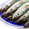 Atlantic mackerel - Stock Photo