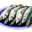 Atlantic mackerel — Stock Photo #6572393