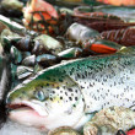 Fresh fish and seafood — Stock Photo