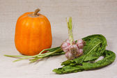 The pumpkin, garlic and greens from kitchen garden — Stock Photo