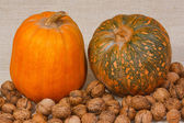 The pumpkin and nuts from kitchen garden — Stockfoto
