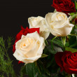 The red and creamy roses from dark background — Stock Photo