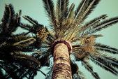 Palm trees vintage photo — Stock Photo