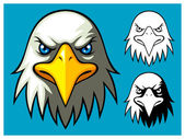 Bald Eagle Head — Stock Vector