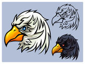 Bald Eagle Head — Stock Vector