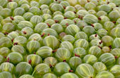 Green gooseberry background — Stock Photo