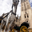 Stock Photo: Seville - Tourist horse carriage