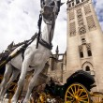Seville - Tourist horse carriage — Stock Photo #6282277