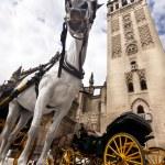 Seville - Tourist horse carriage — Stock Photo
