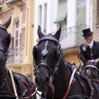 Horse drawn carriage in Seville — Stock Photo