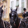 Horse drawn carriage in Seville - Stock Photo