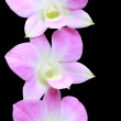 Pink orchid flower on black background — Stock Photo #6157198