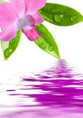 Orquídea roxa de beleza — Foto Stock