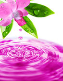 Freshness purple orchid flower — Stock Photo