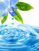 Freshness orchid flower on water background — Stock Photo