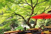 Japanese tea store with maple tree — Stock Photo