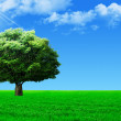 Big tree on green field — Stock Photo #6391557