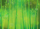 Green bamboo forest — Stock Vector