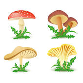Mushrooms vector — Stock Vector