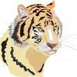 Head of tiger — Stock Photo