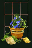 Indoor plants. — 图库照片