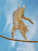 A cat who can fly — Stock Photo