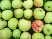 Pattern made of apples (grushovka) — Stock Photo