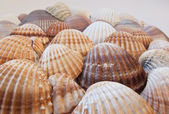 Pattern made of seashells — Stock Photo