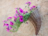 Velvet flower — Stock Photo