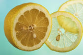 Lemon cut on segments — Stock Photo