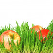 Red apples in a green grass — Stock Photo